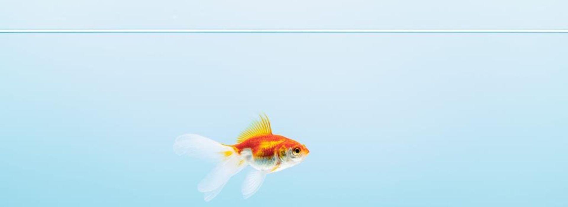 O rybáři a zlaté rybce